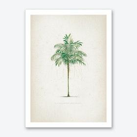 Vintage Kerchove 3 Les Palmiers 2 Art Print