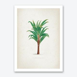 Vintage Kerchove 3 Les Palmiers 15 Art Print