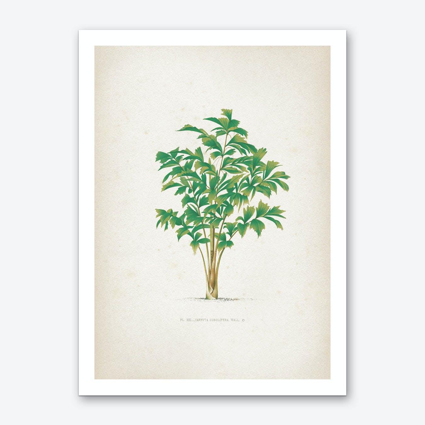 Vintage Kerchove 3 Les Palmiers 21 Art Print