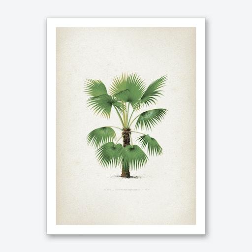 Vintage Kerchove 3 Les Palmiers 26 Art Print