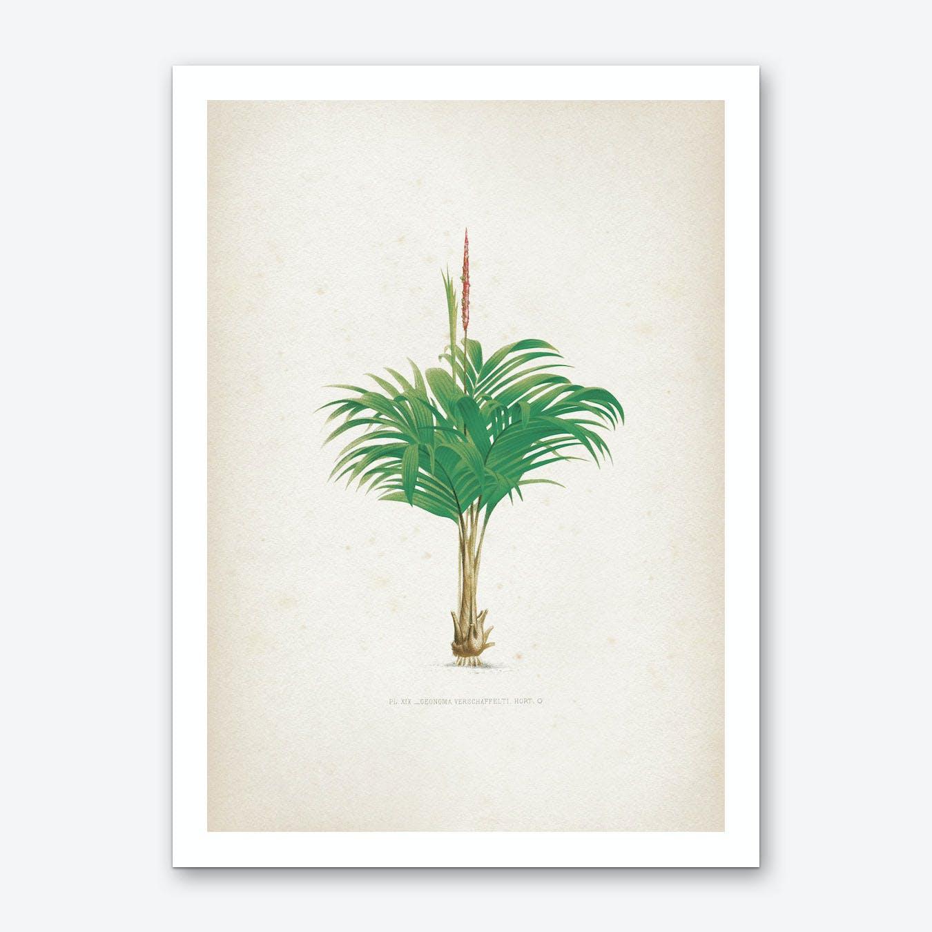 Vintage Kerchove 4 Les Palmiers 19 Art Print
