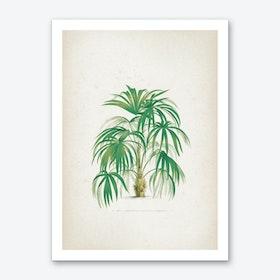 Vintage Kerchove 4 Les Palmiers 24 Art Print