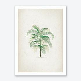 Vintage Kerchove 4 Les Palmiers 40 Art Print