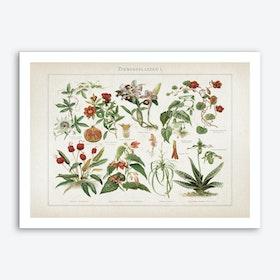 Vintage Meyers 2 Zimmerpflanzen 1 Art Print