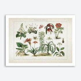 Vintage Meyers 2 Zimmerpflanzen 2 Art Print