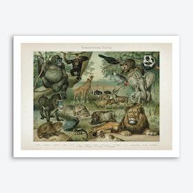 Vintage Meyers 3 Äthiopische Fauna Art Print