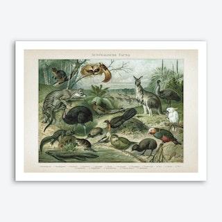 Vintage Meyers 3 Australische Fauna Art Print