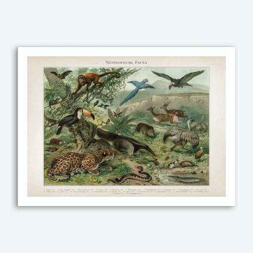 Vintage Meyers 3 Neotropische Fauna Art Print