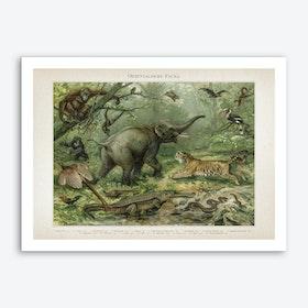 Vintage Meyers 3 Orientalische Fauna Art Print