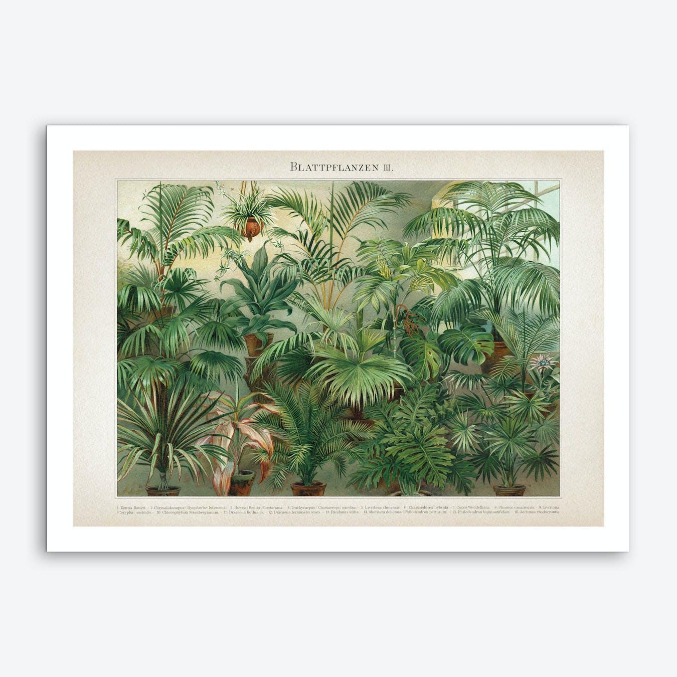 Vintage Meyers 5 Blattpflanzen 3 Art Print