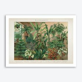 Vintage Meyers 5 Blattpflanzen 4 Art Print