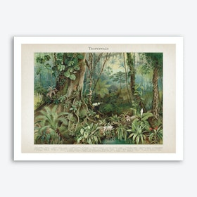 Vintage Meyers 5 Tropenwald Art Print