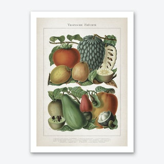 Vintage Meyers 6 Tropische Früchte Art Print
