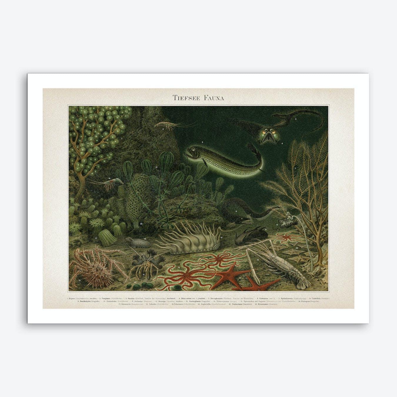 Vintage Meyers 4 Tiefsee Fauna Art Print