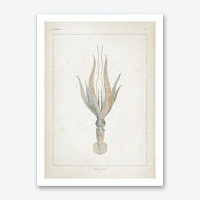 Vintage Vérany 1 Loligopsis Veranii Art Print