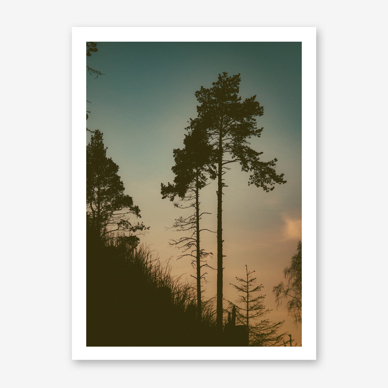 The Forest II Print