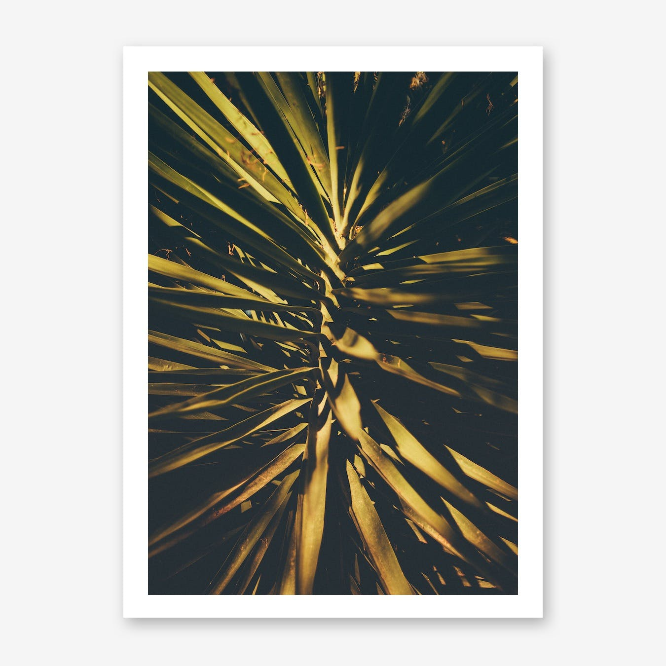 The Palm Print