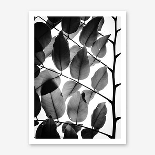 Branches And Leaves Art Print