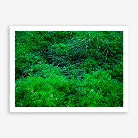 Neglected Natural Garden In The City Art Print