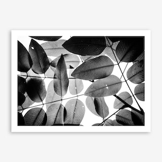 Experiments With Leaves I Art Print