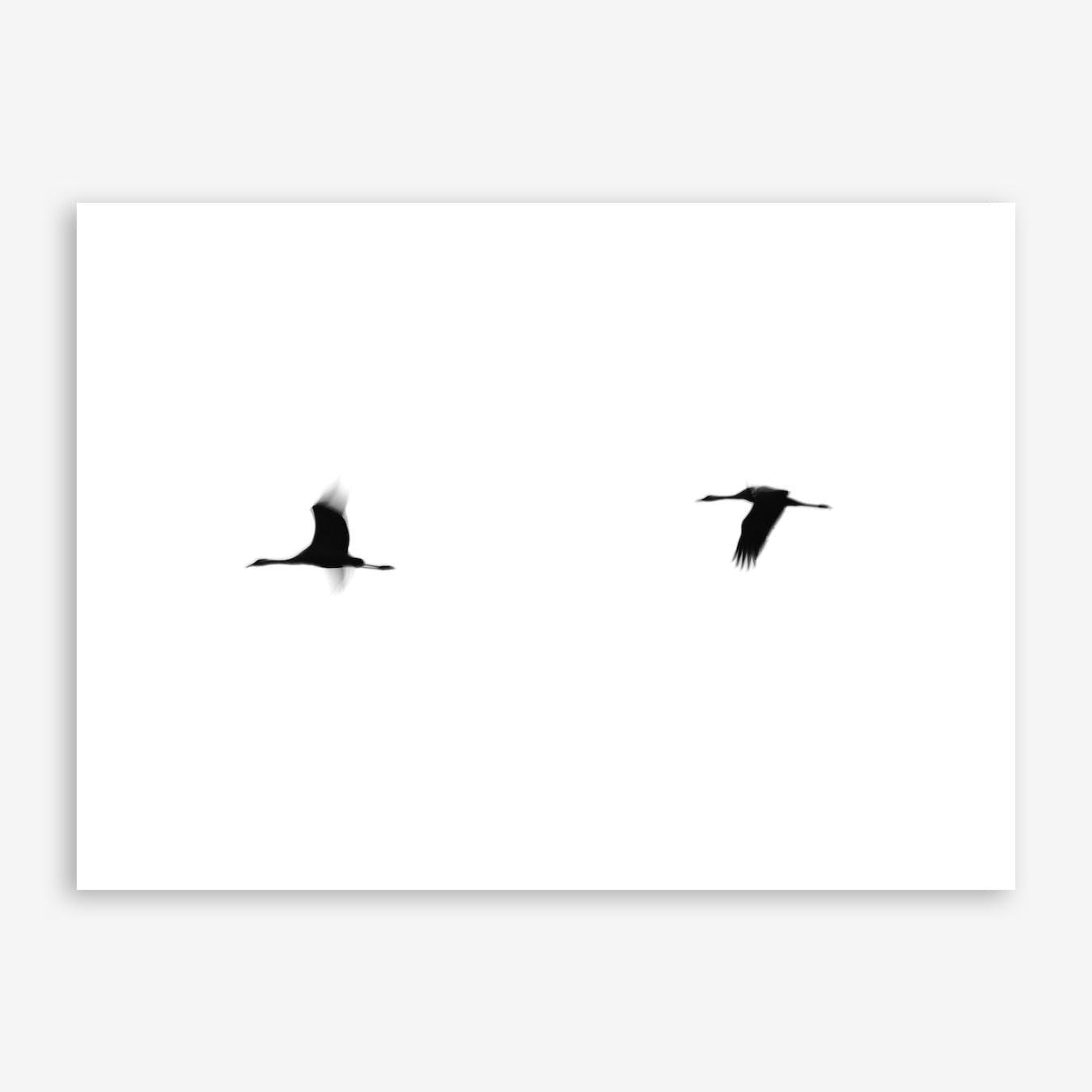 Cranes II Print