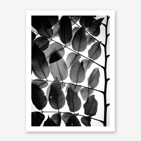 Branches And Leaves I Print By Tal Paz-Fridman