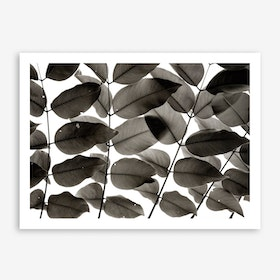 Branches And Leaves II Art Print
