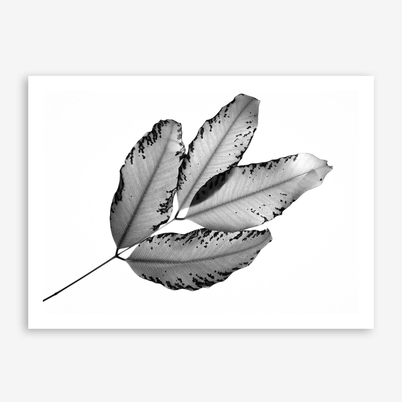 Branches And Leaves Print By Tal Paz-Fridman