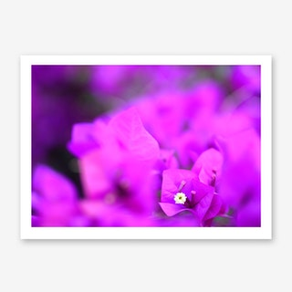 Bougainvillea No. 1 Art Print