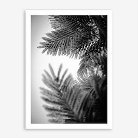 Natural Geometries V Print
