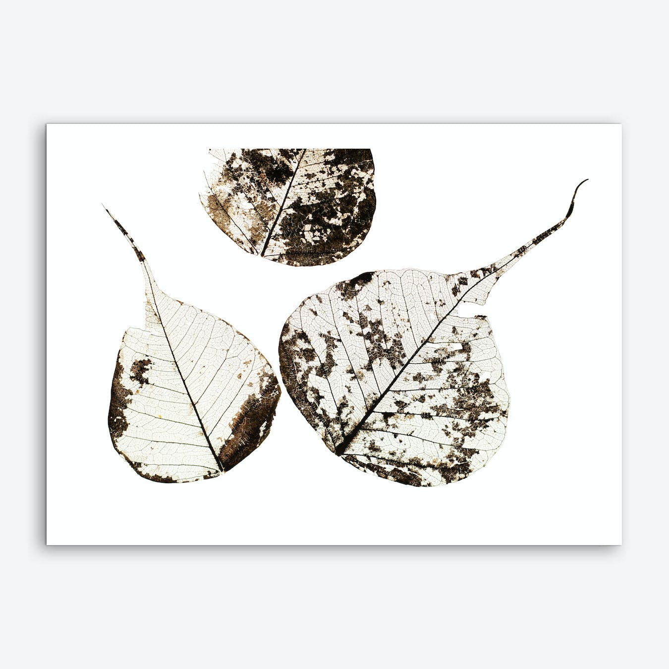 Fallen Leaves #0 Art Print