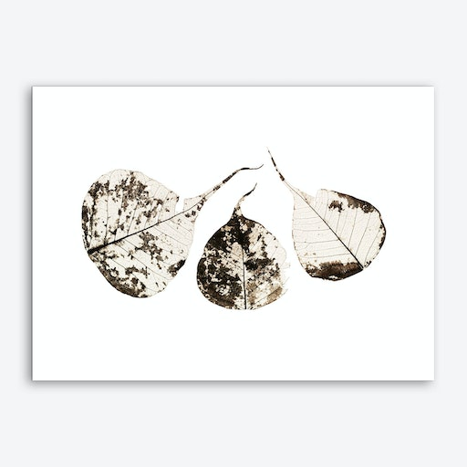 Fallen Leaves #1 Art Print