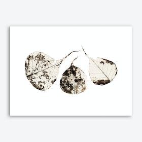 Fallen Leaves #1 Art Print
