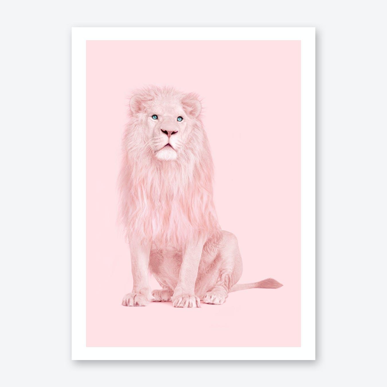 Albino Lion Print