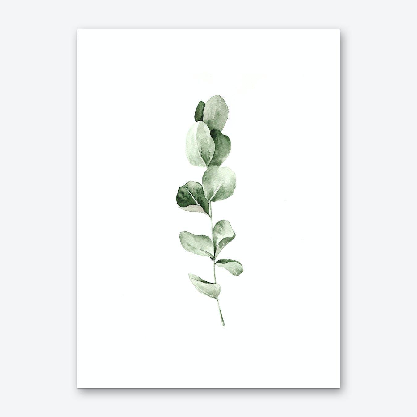 Eucalyptus Art Print I