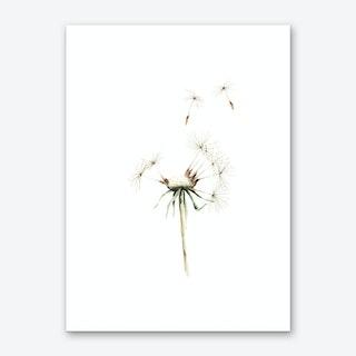 Dandelion Art Print I