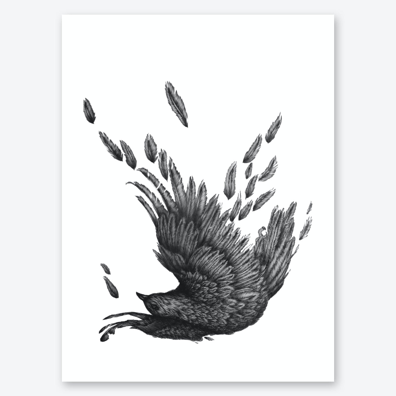 Raven Unravelled Print