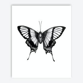 Butterfly Wings Print