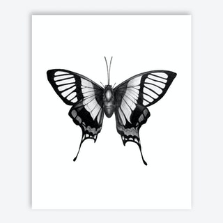 Butterfly Wings Art Print