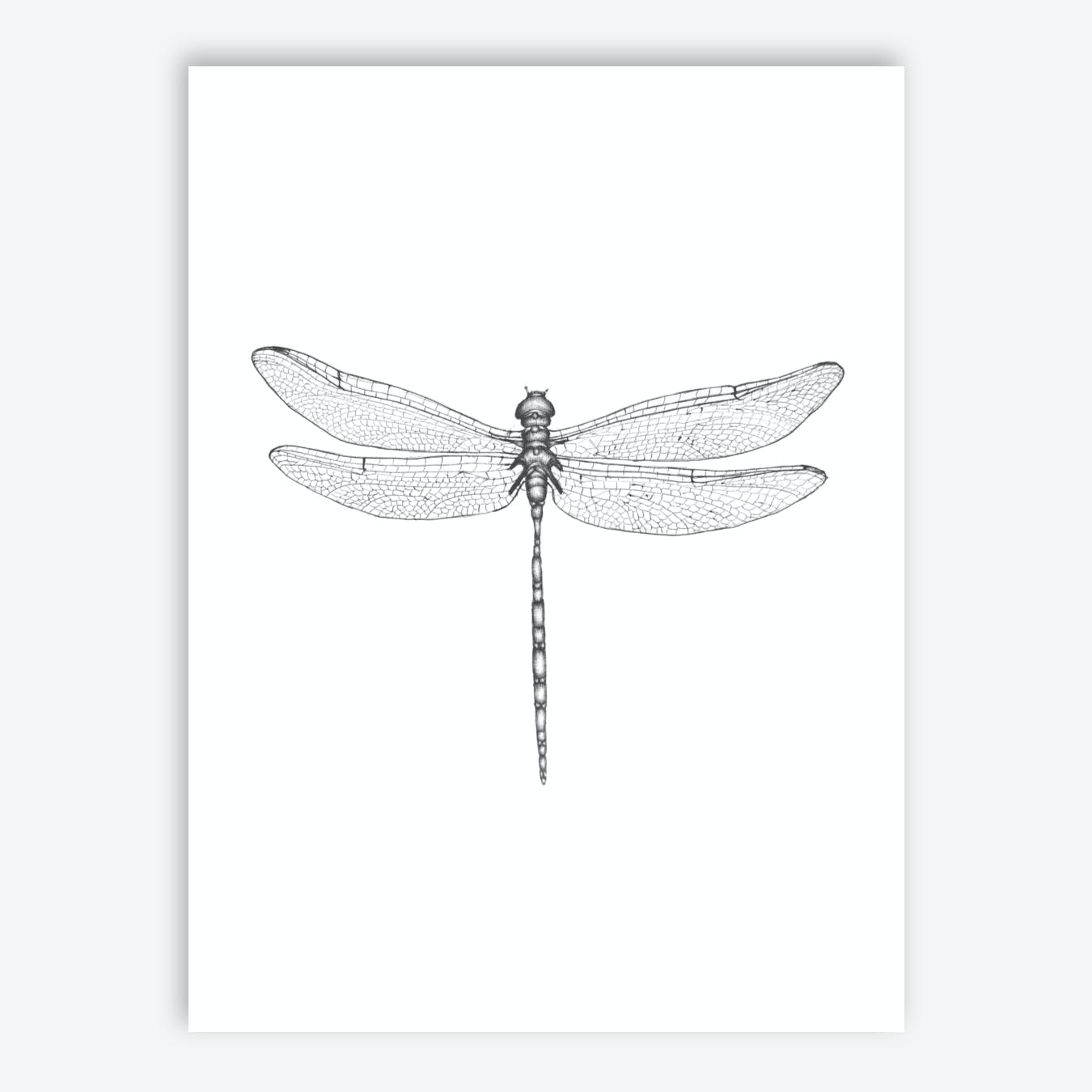 Dragonfly Wings Print