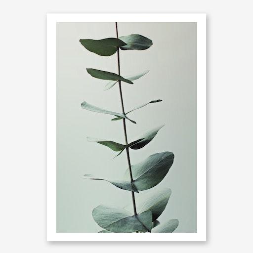 Eucalyptus Greenery in Print