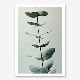Eucalyptus Greenery in Art Print