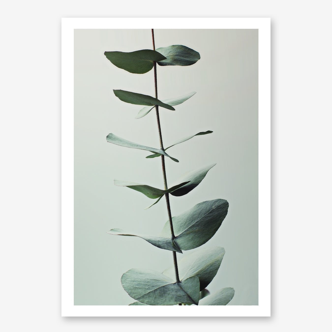 Eucalyptus Greenery in Print