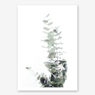 eukalyptus strauch