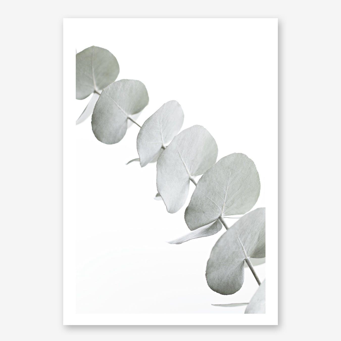 Eucalyptus White III in Print