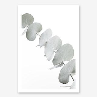 Eucalyptus White III in Art Print