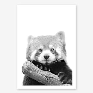 Little Red Panda in Art Print