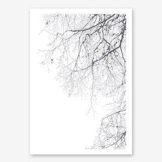 Black Branches 23 in Art Print