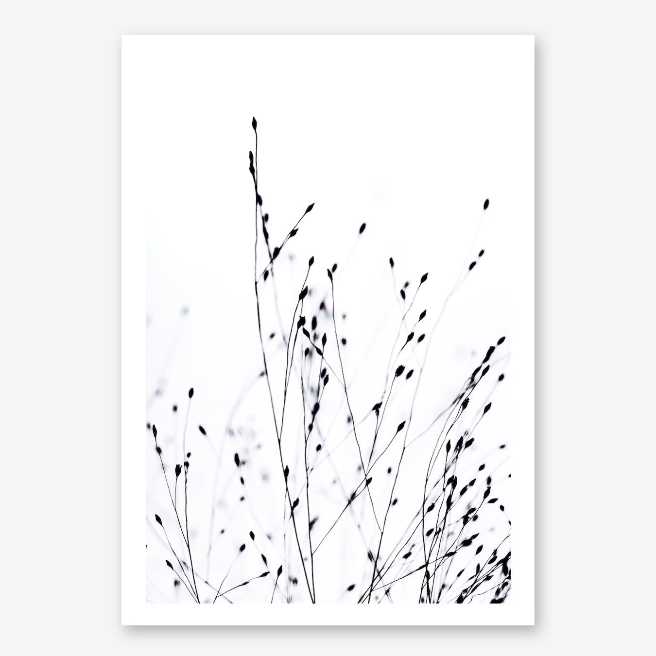 Black Grass in Print