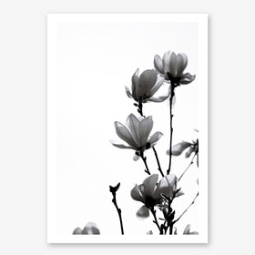 Black Magnolia in Art Print